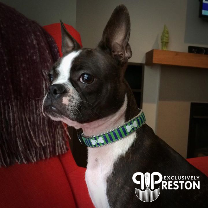 Olive the 12th Dog Preston Ribbon Collar